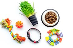 Toys for cat near dry food and grass in pot on white background top view Royalty Free Stock Photography