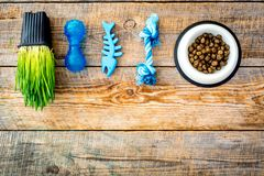 Toys for cat near dry food and grass in pot on wooden background top view copyspace Stock Photography