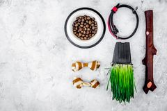 Toys for dog stick and ribbon bone near collar, dry food in bowl and grass in pot on grey background top view copyspace Stock Image
