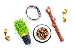 Toys for dog stick and ribbon bone near collar, dry food in bowl and grass in pot on white background top view Stock Photos