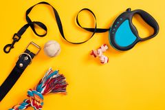 Toys -multi coloured rope, ball, leather leash and bone. Accessories for play and training on yellow background top view royalty free stock photography