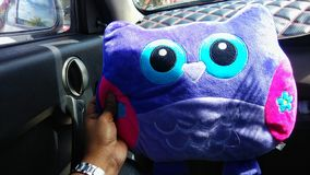Toys. The owl pillow in the car Stock Image