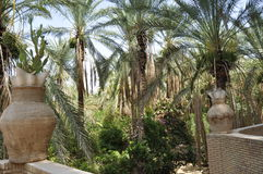 Tozeur oasis in southern Tunisia. Stock Photo
