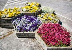 Töpfe mit der verschiedenen Gartenarbeit blüht in der Stadt Lizenzfreie Stockfotos