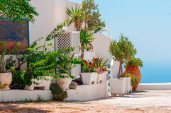 TPlants and flowers on terrace of Thira town on Santorini island Royalty Free Stock Image