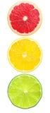 Tráfego dos citrinos ilustração royalty free