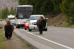 Tráfico en el parque nacional de Yellowstone Foto de archivo