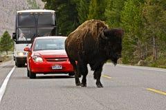 Tráfico en el parque nacional de Yellowstone Foto de archivo libre de regalías