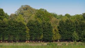 Tráfico por carretera a través del campo alineado árbol almacen de metraje de vídeo