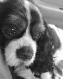 Träumender hund Arkivfoto