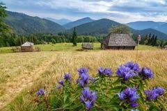 Träövergav hus, i de Carpathian bergen Synevir nationalpark royaltyfria foton
