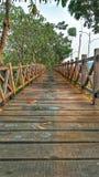 Trä överbryggar Fotografering för Bildbyråer