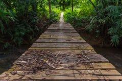 Trä överbryggar i skogen arkivfoto