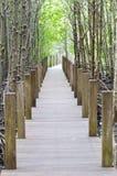Trä överbryggar i skogen Arkivfoton