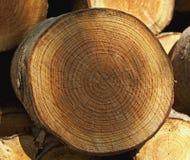 trä Arkivbilder