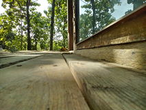 trä Fotografering för Bildbyråer