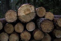 trä Arkivfoton