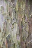 Trä beside av raod för bakgrund Arkivbilder