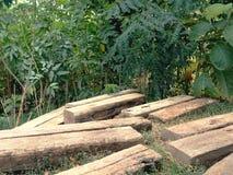trä däcka bakgrund Arkivfoto