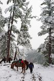 trä för hästmenswhite Arkivfoto