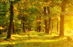 trä för höstlakereflexion Arkivfoton