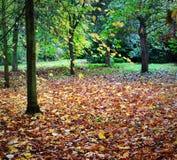 trä för höstlakereflexion Royaltyfri Fotografi