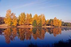 trä för höstlakereflexion Royaltyfri Foto