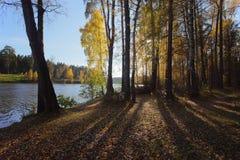 trä för höstlakereflexion Fotografering för Bildbyråer