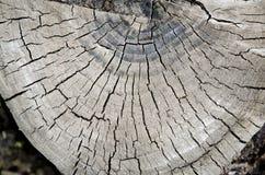 Trä för runt snitt Arkivbild