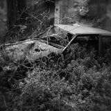 trä för song för grouseförälskelsenatur wild Royaltyfri Fotografi