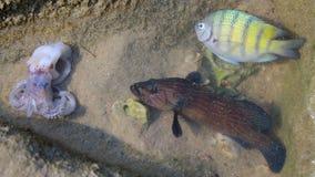 trä för song för grouseförälskelsenatur wild härlig fisk gullig bläckfisk arkivbild