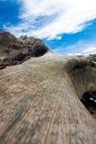 trä för stranddrivastudy Arkivfoto