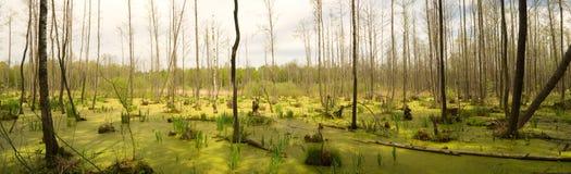 trä för swamp för natur för höstmyrskog arkivfoto