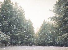 trä för vinter för plats för skoglake fridsamt Arkivfoton