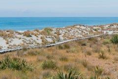 Trä gå vägen på stranden fotografering för bildbyråer