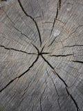 Trä grå färg som är gammal, ålder, material, textur, spricka, trä, cirklar, unikhet Royaltyfria Foton