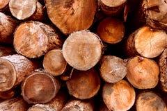 Trä hög av vedträt, skog Arkivfoto