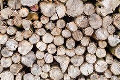 Trä i den utomhus- stapeln Fotografering för Bildbyråer