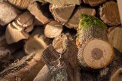 Trä i linje Arkivfoto