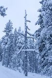 Trä i norr Finland under vinter Royaltyfri Foto