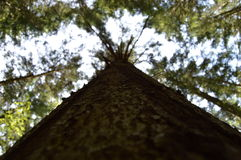 Trä i skog Royaltyfri Foto
