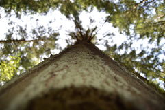 Trä i skog Arkivbilder