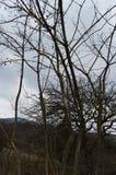 Trä i skog Royaltyfria Bilder