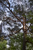 Trä i skogar Fotografering för Bildbyråer