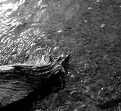 Trä i vattnet Royaltyfri Bild