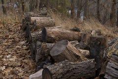 Trä loggar in skogen Arkivfoto