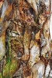 Trä mönstra Royaltyfri Fotografi