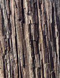 Trä mönstra arkivfoton