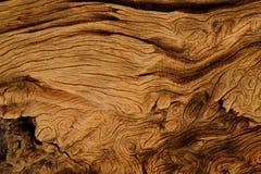 Trä mönstrar Arkivfoto