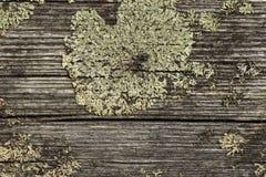 Trä med laver Arkivfoto